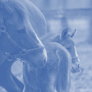 Reproduction and foal