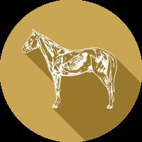 sportpaardenarts-expertise-sportgeneeskunde